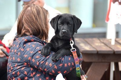 Dog Friendly Placesin Fleetwood