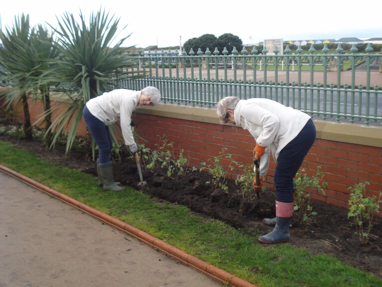Volunteers planting at The Mount Gardens, Fleetwood
