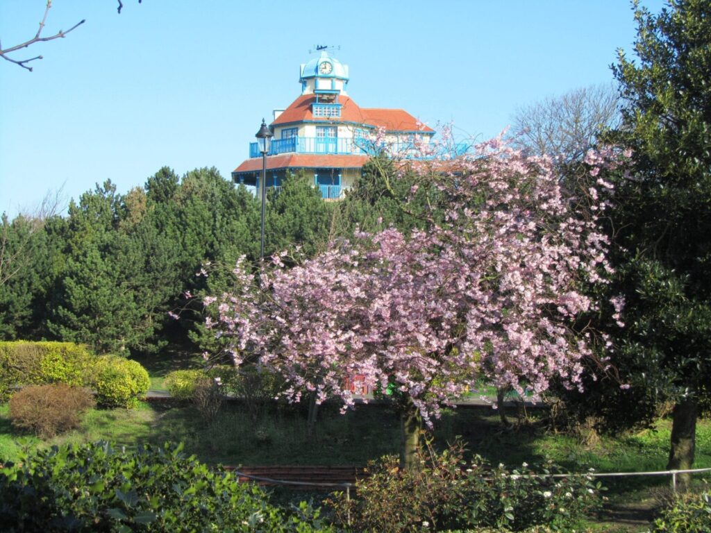 Cherry blossom at The Mount Gardens