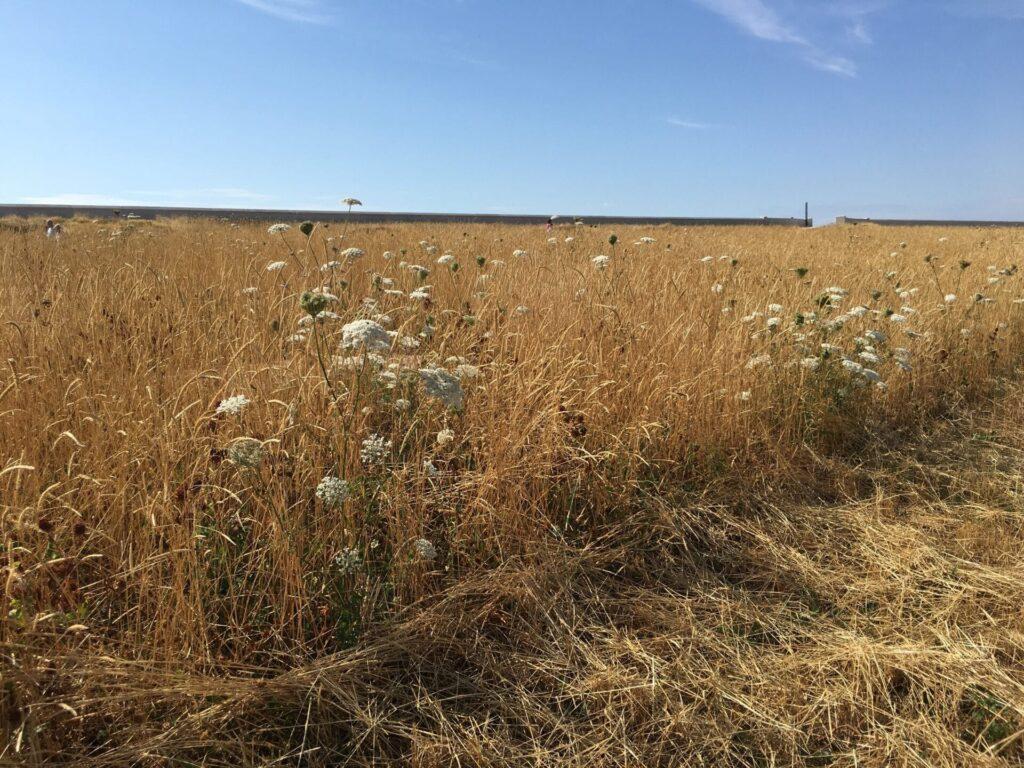 Larkholme Grasslands at Rossall Coastal Defence Scheme